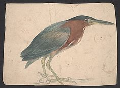 Citation: Sketch of a Green Heron, between 1885 and 1903 . Edwin Lord Weeks papers, Archives of American Art, Smithsonian Institution.