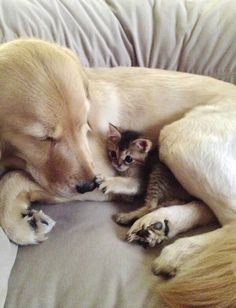 Cute kitten and dog nap time