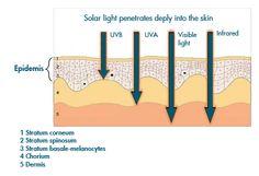 SŁOŃCE I PROMIENIOWANIE ULTRAFIOLETOWE (UV) < OCHRONA PRZECIWSŁONECZNA | Kolastyna