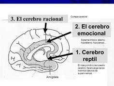 Qué es inteligencia Emocional? | Coach Personal