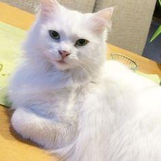 Darf ich euch meine Katze vorstellen ?  Minka kam vor gut 2 Jahren zu uns sie wurde bei unserer Tante ausgesetzt und war total misshandelt  nach ein paar Monaten sah sie wieder blendend aus und hat sich super bei uns eingelebt  ihre komische Angewohnheit isT das sie gerne wie ein Hund Sachen holt und gerne mit wattestäbchen spielt  #filofaxaddict #filofaxing #filofax #planner #plannerlife #plannerlove #planneraddict by filo_kat