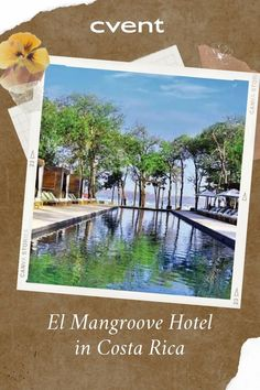 If your clients are looking for amodern beachfront boutique hotel, surrounded by lush tropical jungle and mangroves, look no further than El Mangroove Hotel in Costa Rica. Event Planning Tips, Lush, Tropical, Explore, Costa Rica, Outdoor Decor, Boutique, Boutiques, Exploring