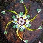 Absolutely stunning floral mandalas