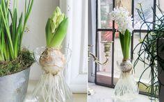 Выращивание гиацинтов в воде Spring Time, Glass Vase, Inspiration, Roses, Home Decor, Biblical Inspiration, Decoration Home, Pink, Room Decor