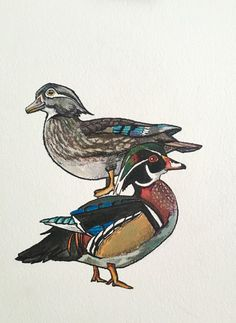 "Acrylic and Ink Painting on Paper ""Wood Ducks"" by Allyson Kramer"