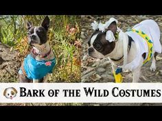 Looking for a Halloween costume for your dog? Here's a DIY video to make your own Link and Zelda inspired dog costumes using designs from Breath of the Wild!