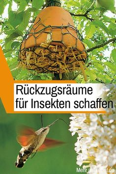 Hotel - u. pollinate flowers and eat pests: with one can you d -Insect Hotel - u. pollinate flowers and eat pests: with one can you d - hedgehog environment Back Gardens, Outdoor Gardens, Diy Nature, Fleurs Diy, Beneficial Insects, Garden Pests, Plantation, Gardening, Garden Inspiration