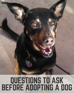 Questions to ask before adopting a dog