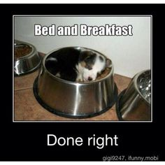 Now this is breakfast in bed... Kind of lol
