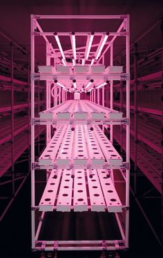 Modular racking and gullys used inside Hydrogarden's vertical farming system - Project Urban Grow Project Urban Grow | A new vertical farming concept from HydroGarden http://www.hydrogarden.com/news/364-project-urban-grow-/