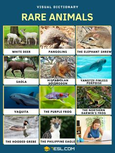 Rare Animals | Top 10 Rarest Animals on Earth and Fun Fact about Them Frog Species, Animal Species, Endangered Species, Amphibians, Mammals, Elephant Shrew, Philippine Eagle, Visual Dictionary, Animal Fun