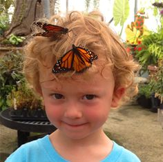 Butterfly Experience at Back Home on the Farm – Harrisonburg, Virginia