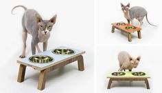 Mid-century Modern Cat Furniture from Modernist Cat