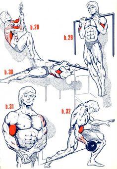 Biceps6