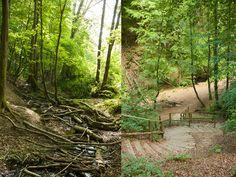 Kleine Wanderung von der Waldau (Venusberg) nach Poppelsdorf, durch das urige verwunschene Melbtal