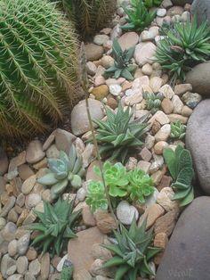 gardenfuzzgarden.com dry creek bed with succulents - gardenfuzzgarden.com