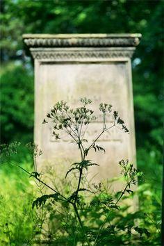 Der Marienfriedhof in Hildesheim (81)