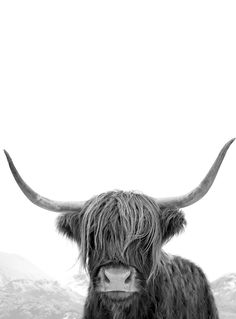 Highland Cow Photography (Black and White Portrait) - Highland Cow Print Tierfotog . - Highland Cow Photography (Black and White Portrait) – Highland Cow Print Wildlife photography Highland Cow Art, Scottish Highland Cow, Highland Cattle, Highland Cow Tattoo, Black And White Prints, Black And White Portraits, Black And White Photography, Black White, Animals Black And White