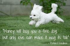 Money will buy you a fine dog, but only love can make it wag its tail. – Richard Friedman
