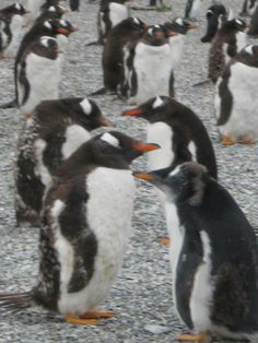 Excursión parra caminar entre pingüinos en Haberton, cerca de Ushuaia