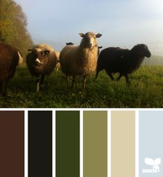 creature hues