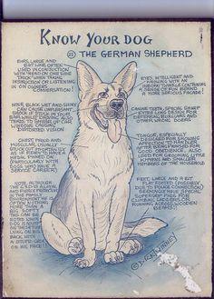 Know your dog the German Shepherd. http://www.sweetshepherdrescue.com.au/