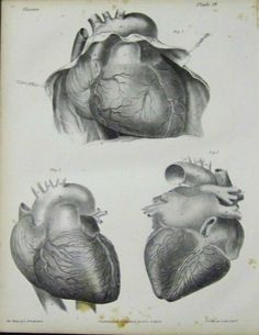 Prints Old & Rare - Medical and Surgical page