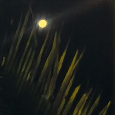 #fullmoon #moon #textures #nature #naturelovers #prisma #minimal #minimalist #fullmoon
