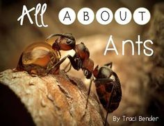 Natural Solutions to Remove Ants from Your Home Ant Insect, Insect Art, Nature Sauvage, Fotografia Macro, Butterfly Photos, Living Water, Tier Fotos, Natural Solutions, Life Cycles