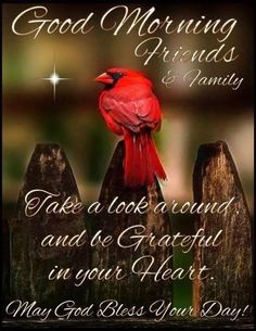 💗Be Grateful in your Heart💗 Good Morning God Quotes, Morning Inspirational Quotes, Good Morning Picture, Good Morning Friends, Good Morning Greetings, Good Morning Good Night, Morning Pictures, Good Morning Wishes, Morning Pics