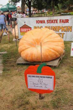 Big Pumpkin Contest, Iowa State Fair by lovemaderadishgrow #Pumpkin_Contest #Iowa #State_Fair #lovemaderadishgrow