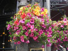 London hanging basket