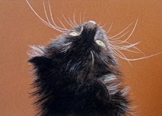 Black Cat | KunstiX
