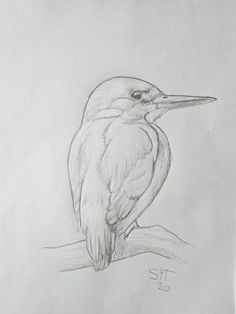 Birds, Fine Art, Drawings, Animals, Drawing Drawing, Animales, Animaux, Bird, Sketches