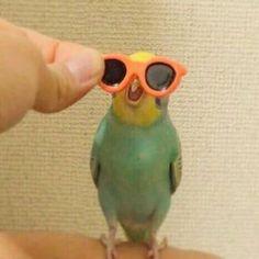 BORB He while He style Aber am wichtigsten Er lächelt 01 Budgies My Heart! Funny Birds, Cute Birds, Cute Funny Animals, Cute Baby Animals, Funny Cute, Animals And Pets, Wild Animals, Cute Memes, Funny Memes