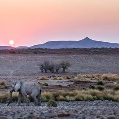"""James Suter on Instagram: """"We were privileged to spend time with a small herd of Namibian Desert-Adapted elephants and we filmed and photographed these animals with no one else around. It was incredible. Namibia is home to one of two known groups of desert adapted elephants in the world, with the other group being found in Mali. #saveelephants #ivoryfree #elephant #desertadapted #namibia #african #travel #explore #safari #adventure #conservation"""""""