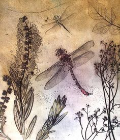 Dragonflies, a dry point etching into plastic without the use of acid. Intaglio Printmaking, Collagraph, Drypoint Etching, Illustration Art, Illustrations, Etching Prints, Gravure, Botanical Art, Art Images