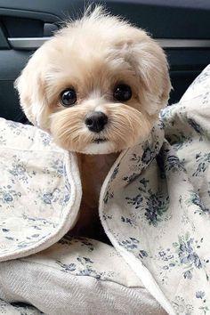Super Cute Puppies, Baby Animals Super Cute, Cute Baby Dogs, Cute Little Puppies, Cute Dogs And Puppies, Cute Little Animals, Cute Funny Animals, Cutest Dogs, Doggies