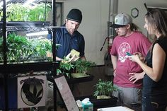 Have you ever considered the benefits of taking up marijuana courses?  If you haven't and are looking to start a marijuana business, then it is time for you to think about taking these courses.