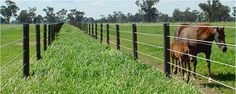 Practical Guidelines For The Installation Of Horse Fences