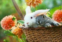 Spring Green, Spring Colors, Smile Images, Call Of The Wild, House Rabbit, Cute Bunny, Bunny Bunny, End Of Summer, Fall Halloween