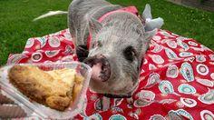 National Rhubarb Pie Day 2015