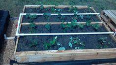My Pinterest-Inspired Pallet Garden, which is self-watering!