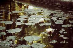 Lotus.-