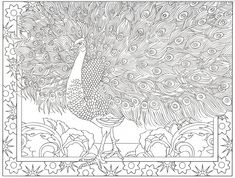 Peacock coloring page 19/31
