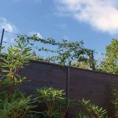 The Harrod Wall & Fence Wire Kit is a simple, strong and cost effective solution for screening the top of a wall or fence, perfect for supporting climbing plants. Garden Trellis Panels, Wire Trellis, Trellis Fence, Wire Fence, Fence Panels, Wall Climbing Plants, Climbing Vines, Fence Design, Garden Design