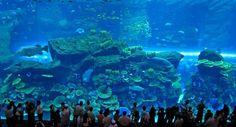 Dubai Mall Aquarium - Best Aquariums In The World