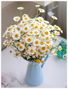 Love daisies!  Daisies are the friendliest flower!