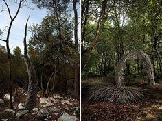 Une année à magnifier la forêt