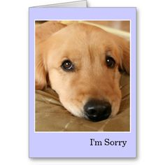Golden Retriever I'm Sorry Apology Card by #AugieDoggyStore